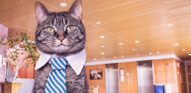 Caracterización del cliente en el desarrollo web a medida. Un gato con una corbata